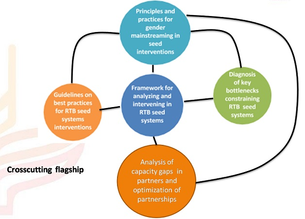 Seed system flagship and linked products