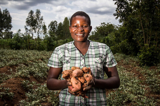 Potato and Sweetpotato in Africa: Transforming the Value Chains for Food and Nutrition Security