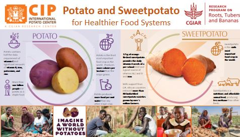 Potato and sweetpotato for healthier food systems.