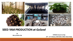Seed yam production at GoSeed