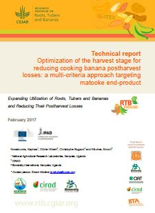 Technical report: Optimization of the harvest stage for reducing cooking banana postharvest losses: a multi-criteria approach targeting matooke end-product.